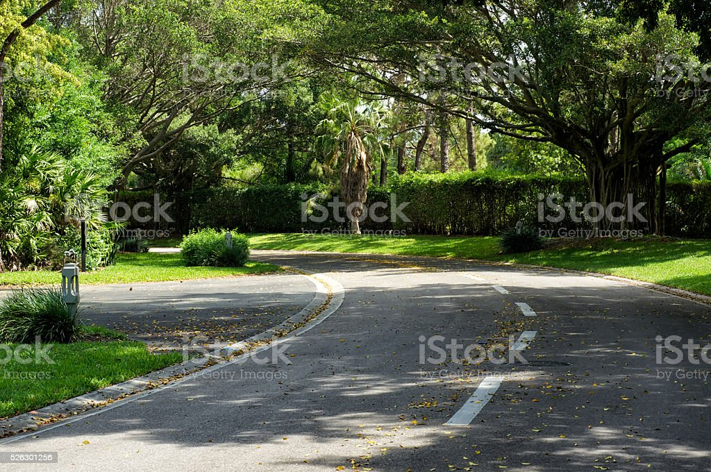 beautifully curving tree lined road stock photo