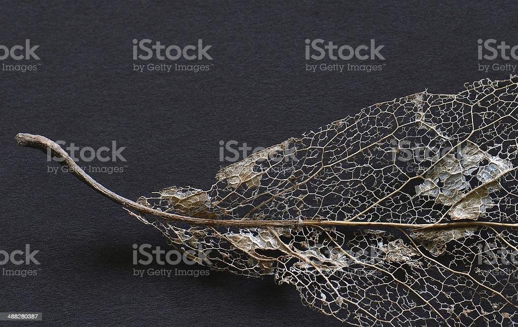 Beautifully Lacy stock photo