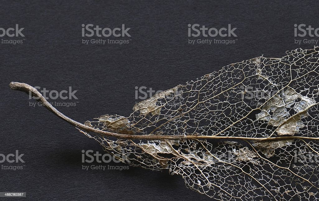 Beautifully Lacy stock photo