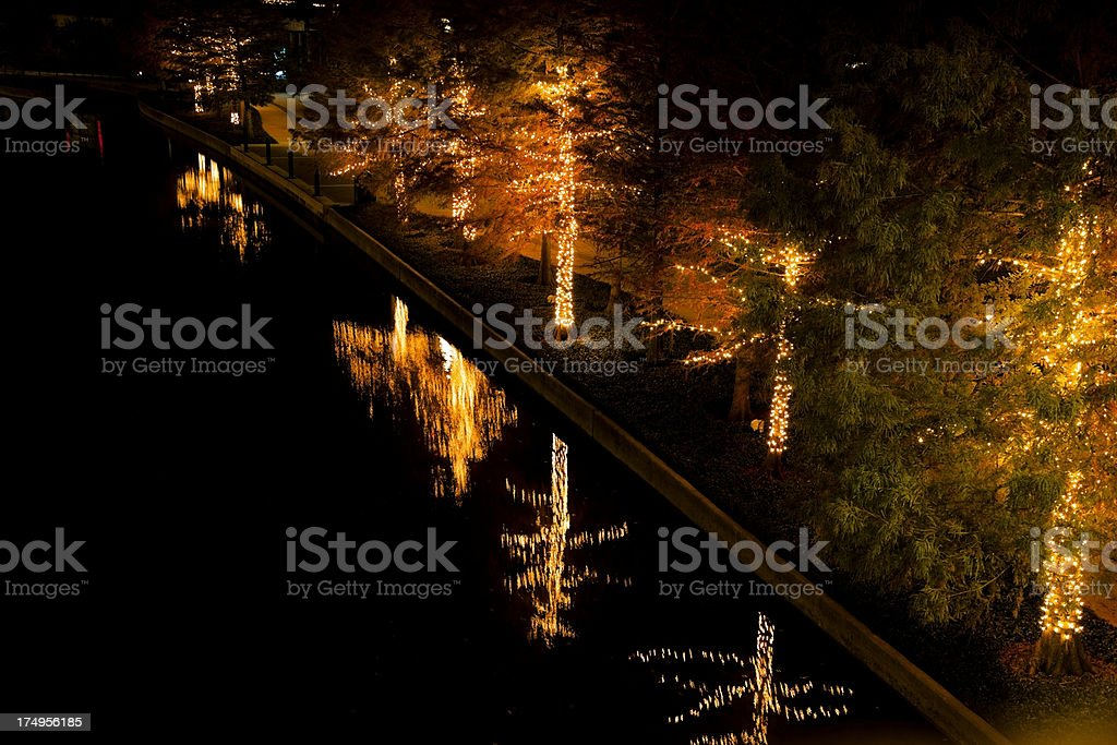 Beautifully lit trees with water reflection royalty-free stock photo