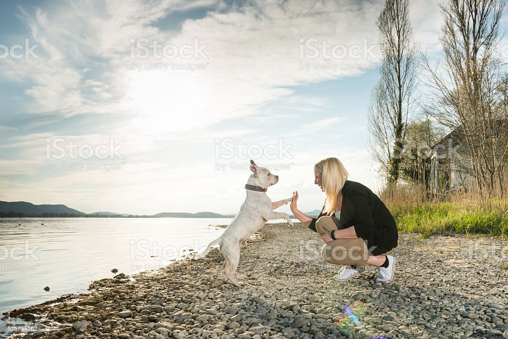Beauty and dog friendship stock photo