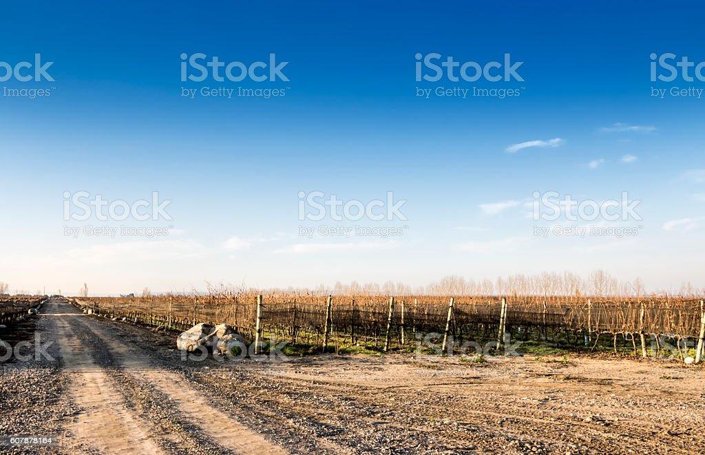 Beauty autumn at vineyard stock photo