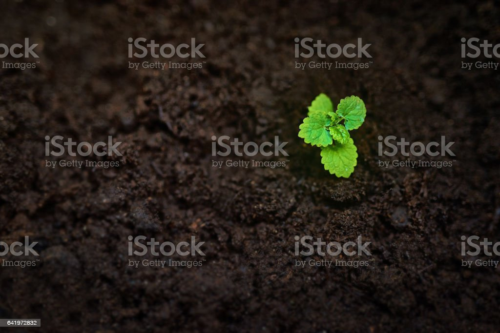 Beauty blooms from the dirt stock photo