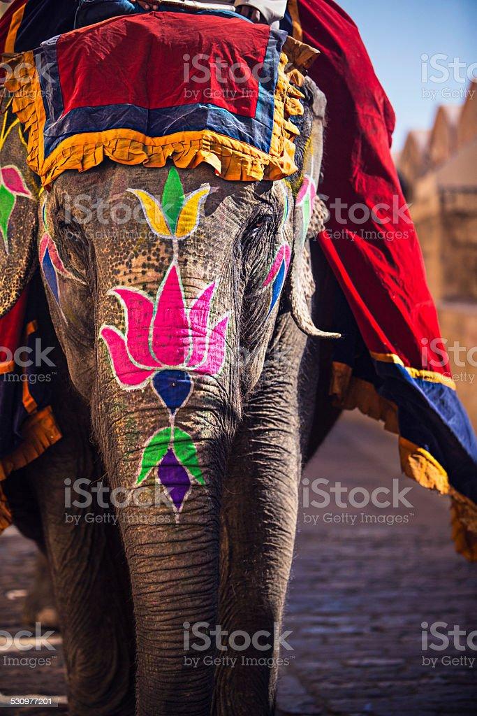 Beauty elephant stock photo