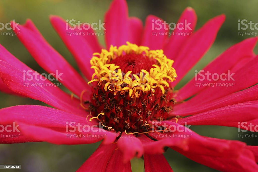 Beauty for reproduction stock photo
