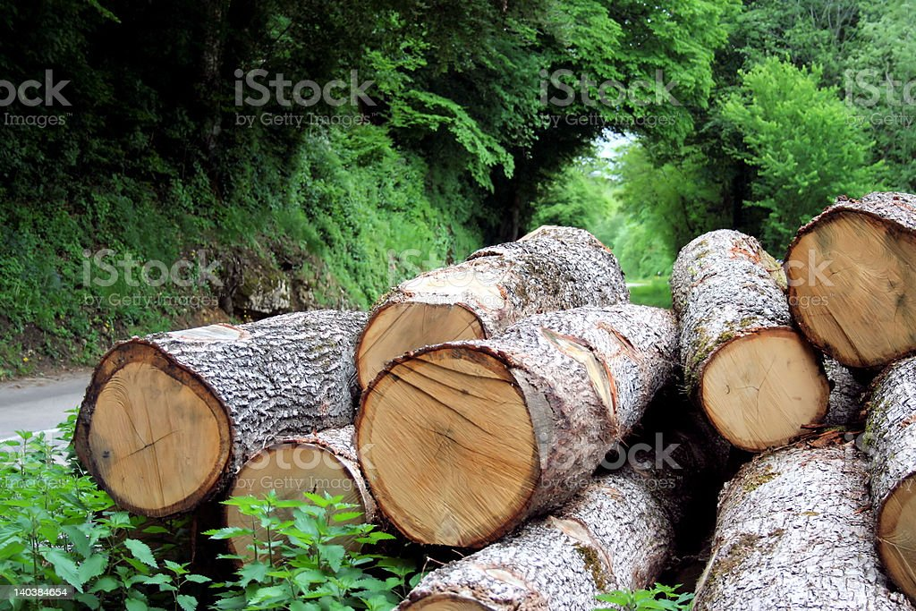 'Beauty forest green', Trunks of pines royalty-free stock photo