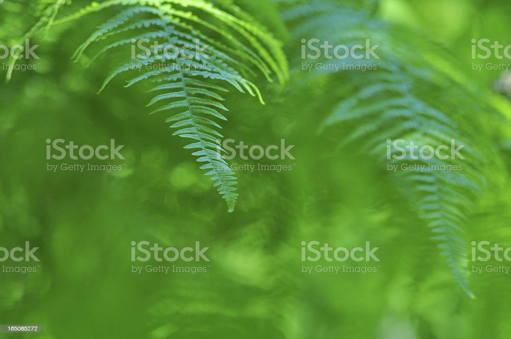 Beauty frond close-up in sunny forest royalty-free stock photo