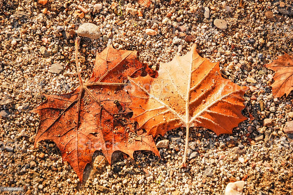 Beauty in Death, Fall leaves stock photo