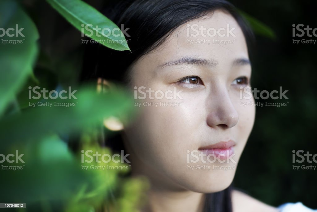 Beauty in Jungle royalty-free stock photo