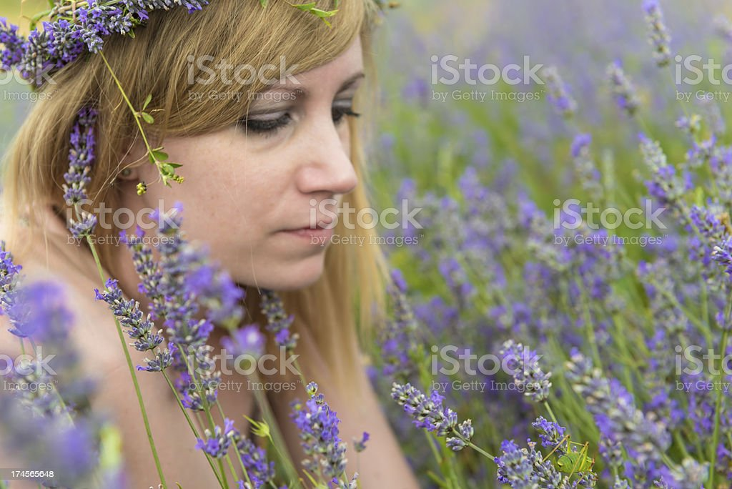 Beauty in lavender field royalty-free stock photo