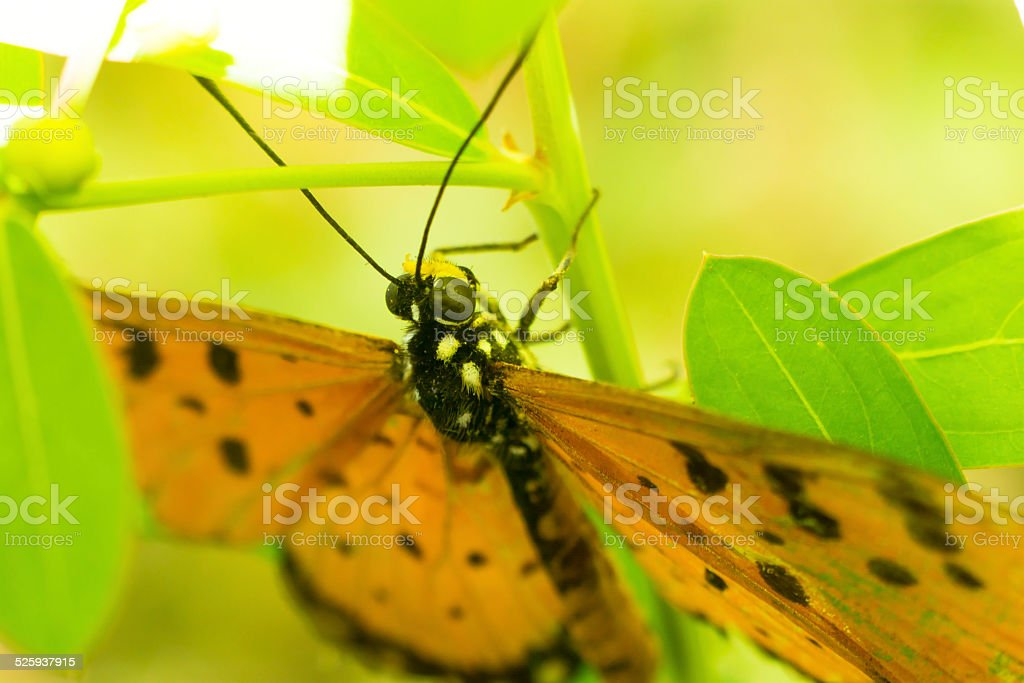 ?Beauty in nature royalty-free stock photo