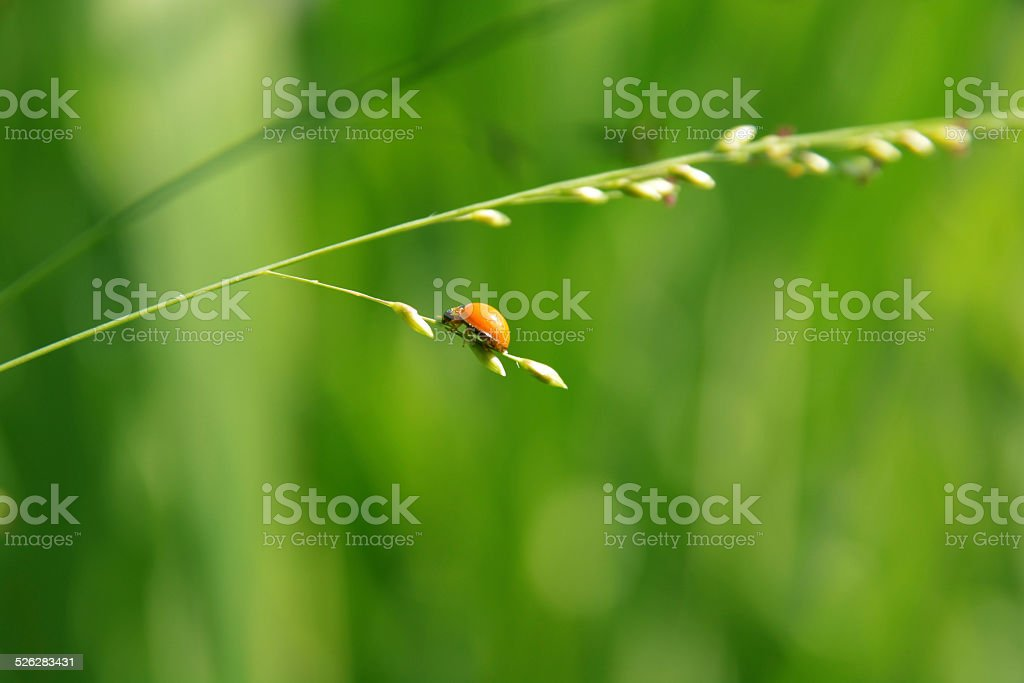 Beauty in nature with bugs royalty-free stock photo
