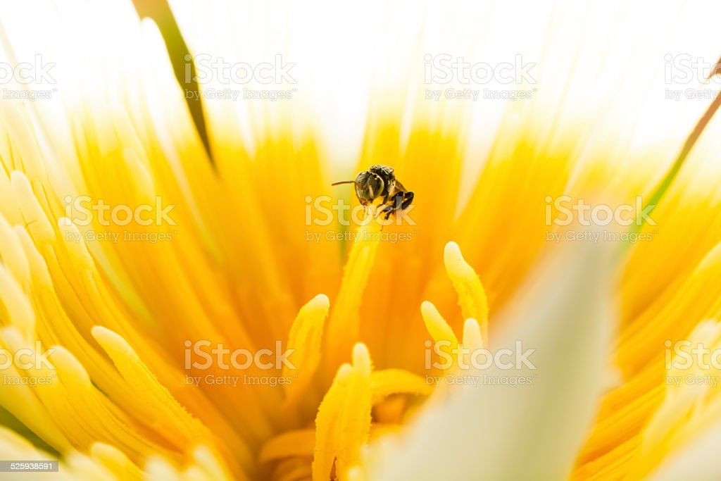 Beauty in nature with Stingless royalty-free stock photo