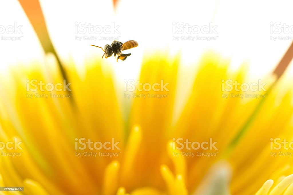 Beauty in nature with Stingless stock photo