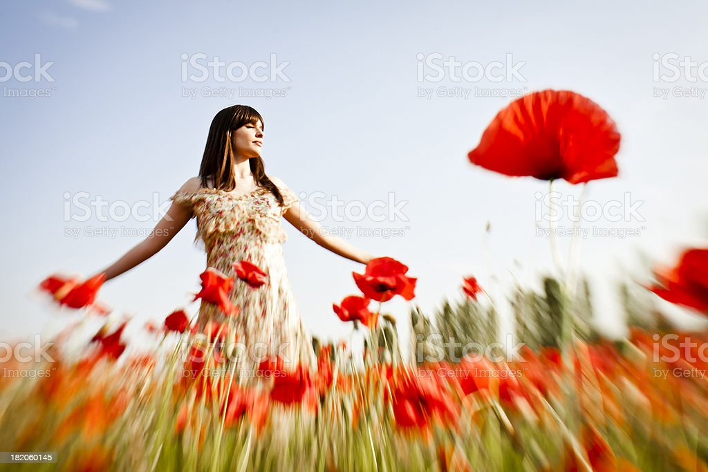 Beauty in poppy field at sunset stock photo