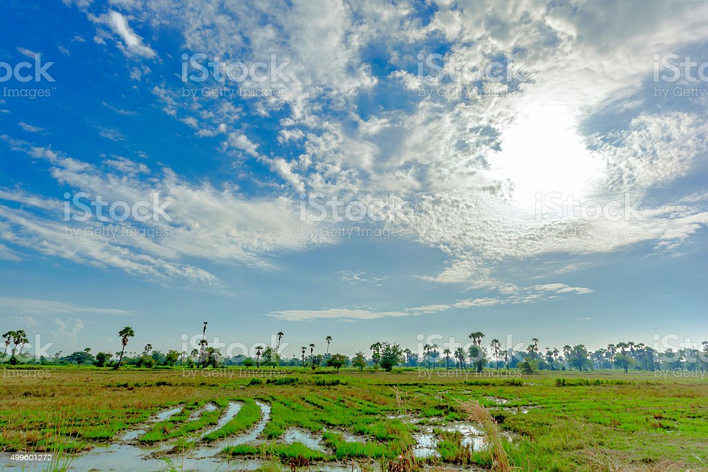 Beauty nature with blue sky and meadow royalty-free stock photo