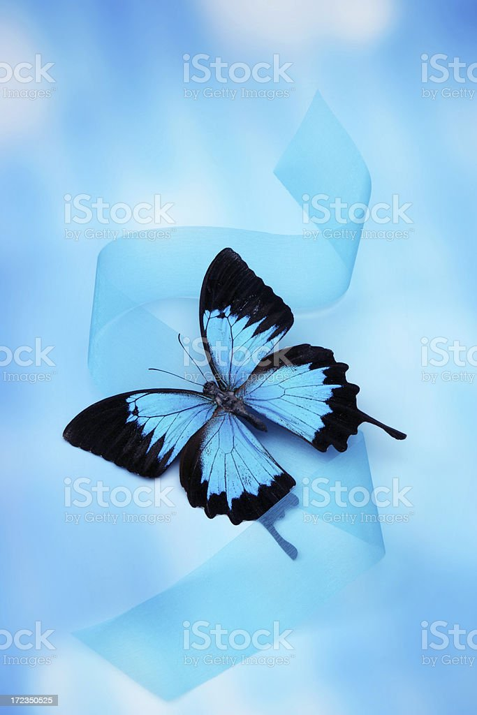 Beauty of Butterfly royalty-free stock photo