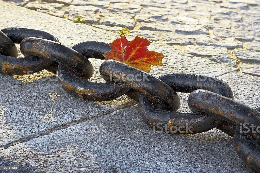 Beauty of  fading autumn royalty-free stock photo