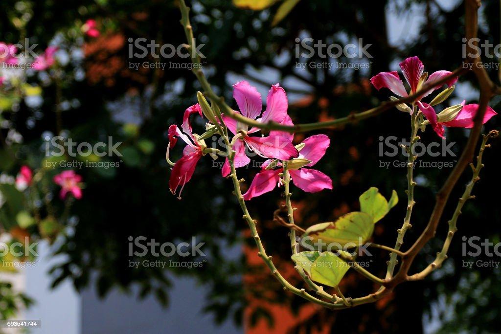 Beauty of Flower stock photo
