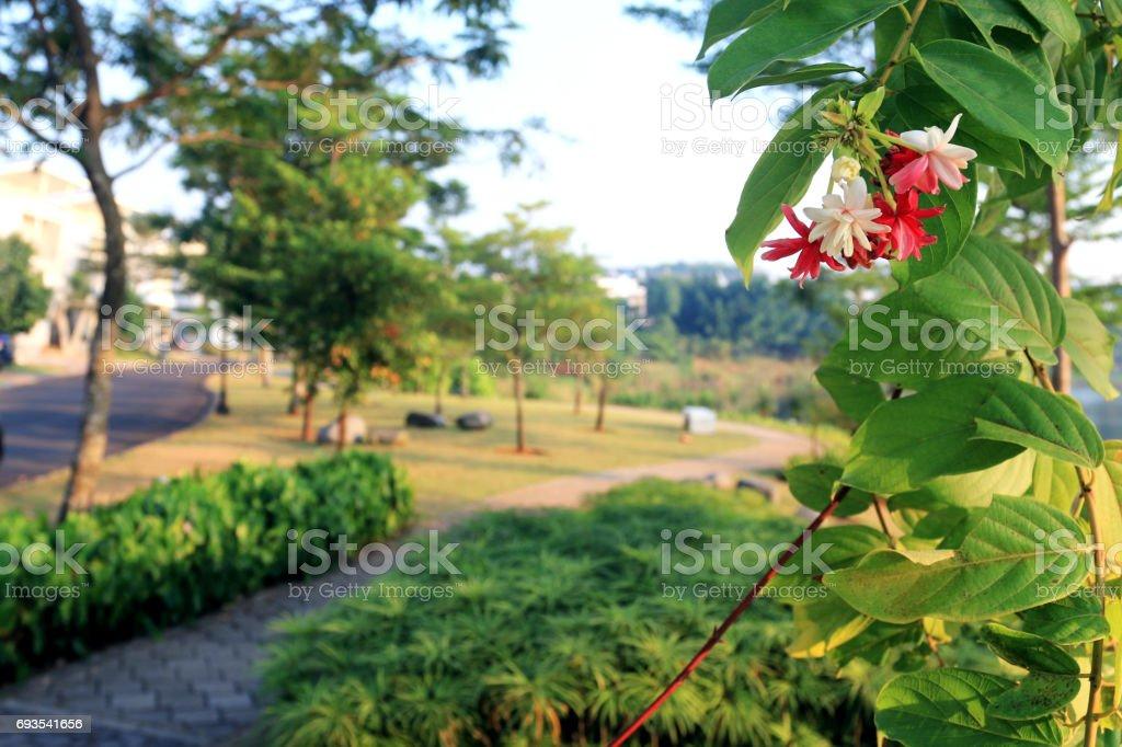 Beauty of Garden stock photo