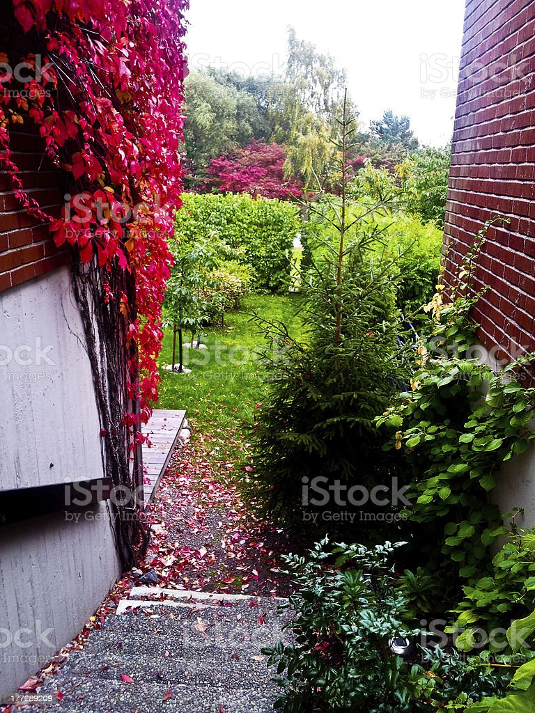 Beauty of the nature royalty-free stock photo