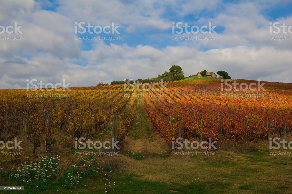 Beauty of vineyards in autumnal colors stock photo