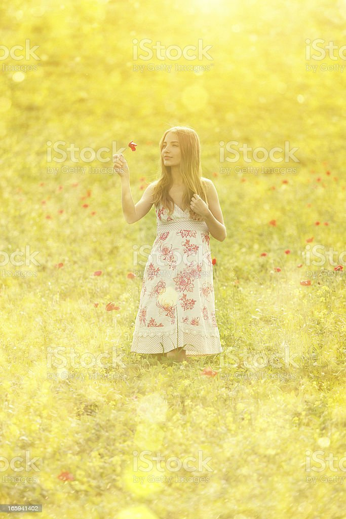 beauty picking poppies in poppy field royalty-free stock photo