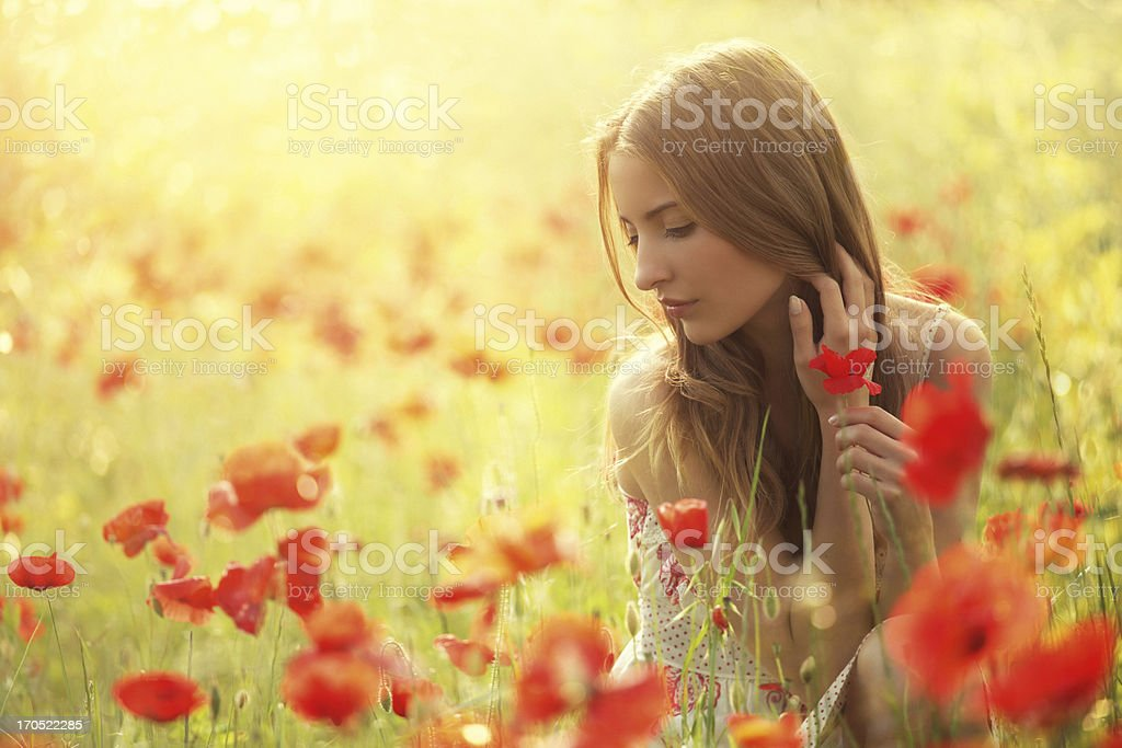 beauty picking poppies in poppy field royalty-free stock photo