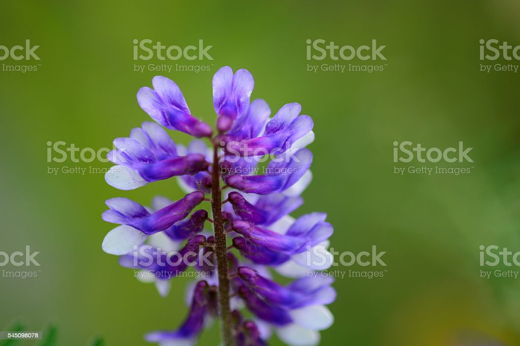 Beauty Purple color flowers stock photo