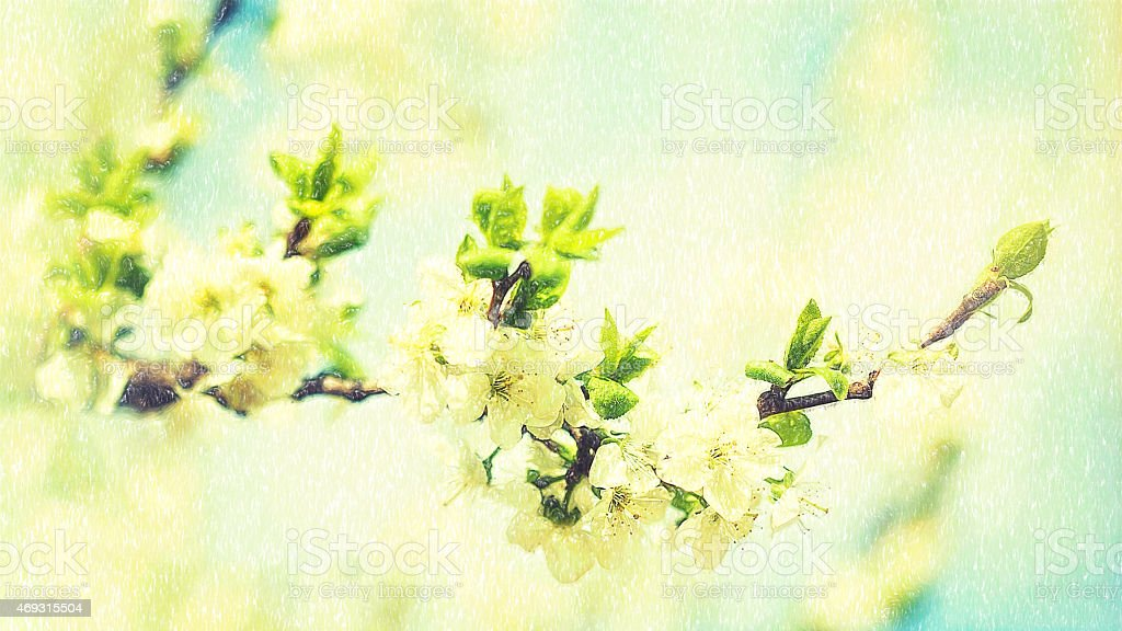 Beauty spring backgrounds with apple tree flowers, fine art simu stock photo