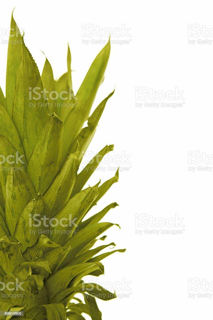 beautyful fresh pineapple leaves stock photo