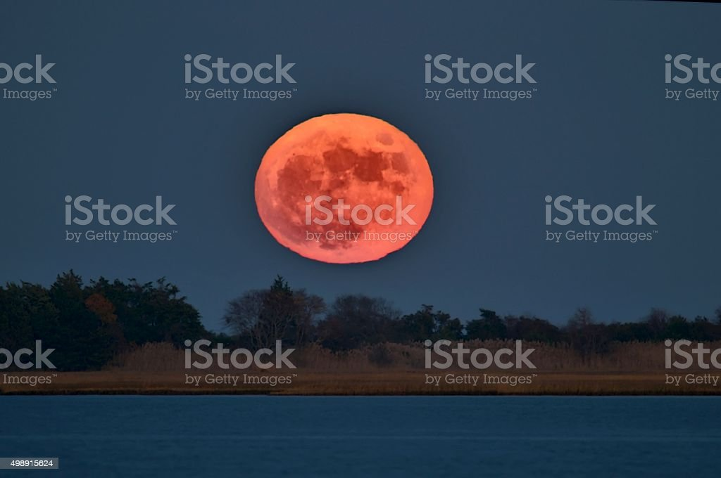 Beaver Blood Moon stock photo