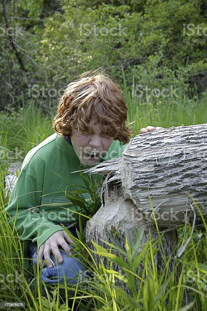 Beaver Boy stock photo