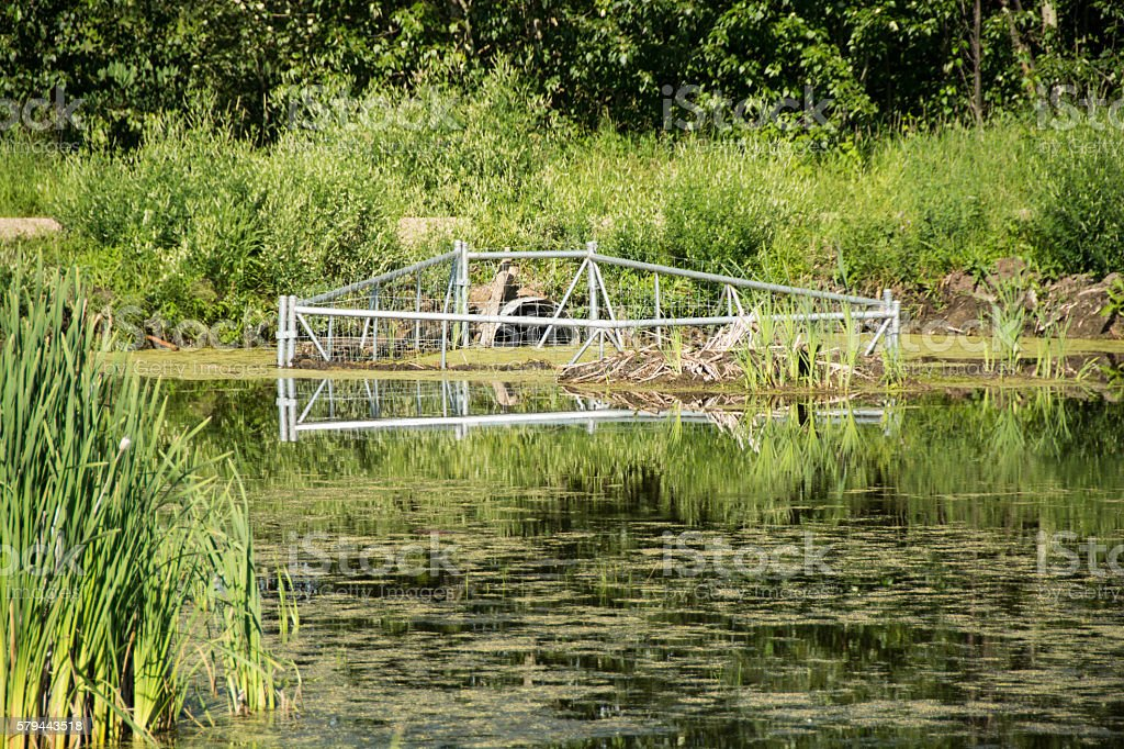 Beaver control on road culverts- wire mesh frame stock photo
