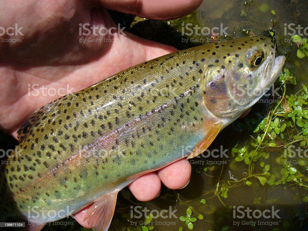 Beaver Creek Rainbow royalty-free stock photo