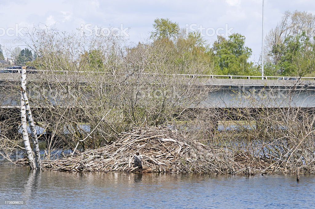Beaver dam and freeway bridge stock photo