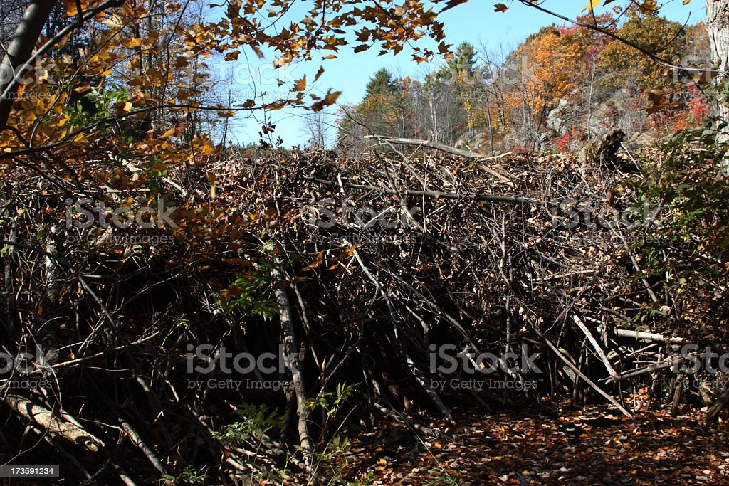 Beaver Dam close- up stock photo
