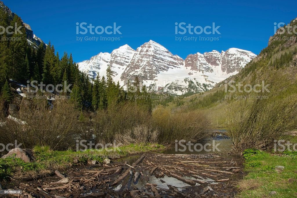 Beaver Dam in front of Maroon Bells, Colorado royalty-free stock photo