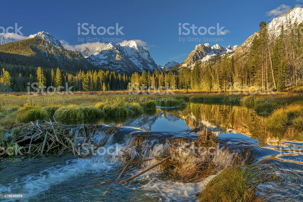 Beaver dam in Idaho mountains stock photo
