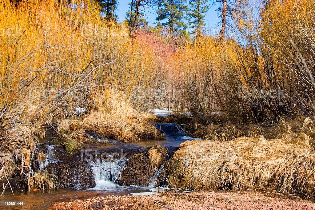 Beaver Dam royalty-free stock photo