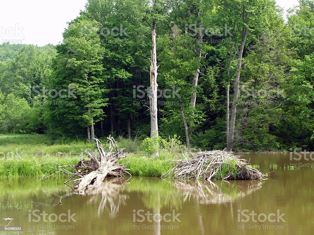 Beaver Dam royalty-free stock photo