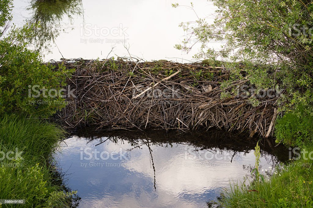 Beaver Dam Wild Animal Lodge Lake Rocky Mountains stock photo