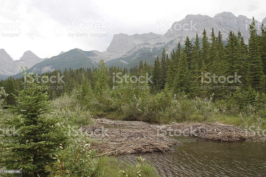 Beaver Dams on the Bow River, Canmore, Alberta royalty-free stock photo
