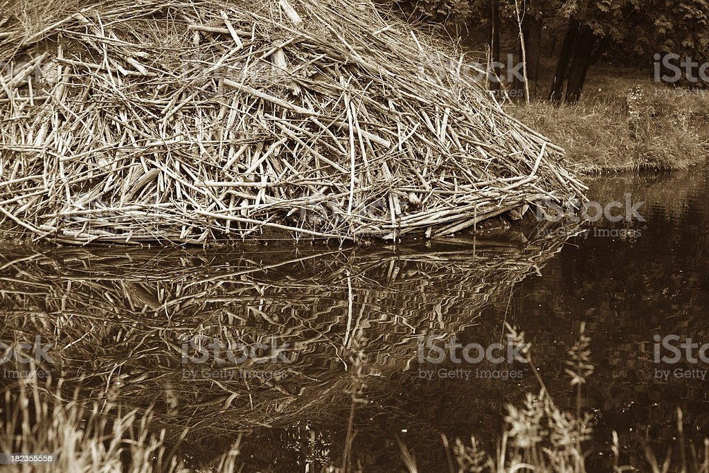 Beaver house royalty-free stock photo