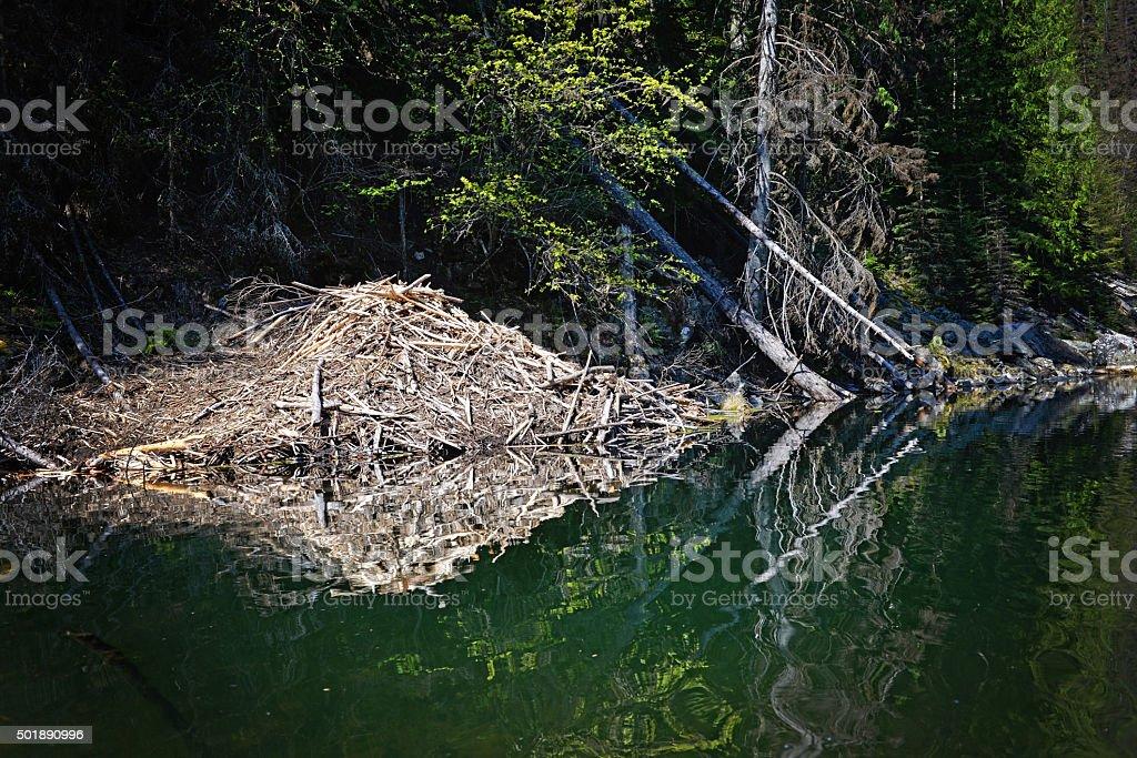 Beaver Lodge stock photo