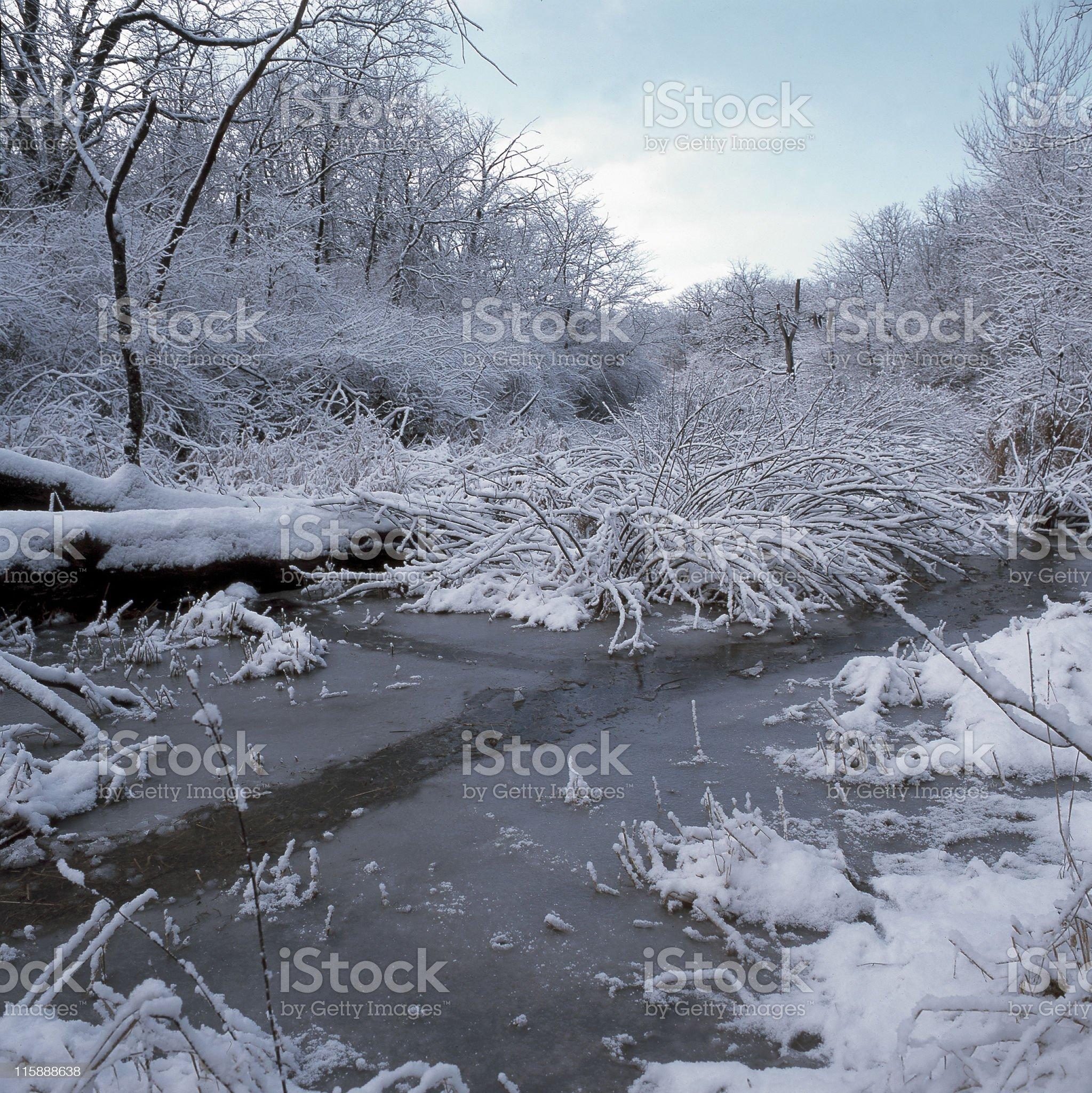 Beaver Path royalty-free stock photo