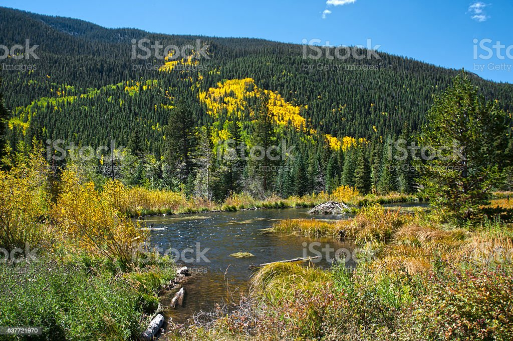 Beaver Pond and Lodge in Autumn stock photo