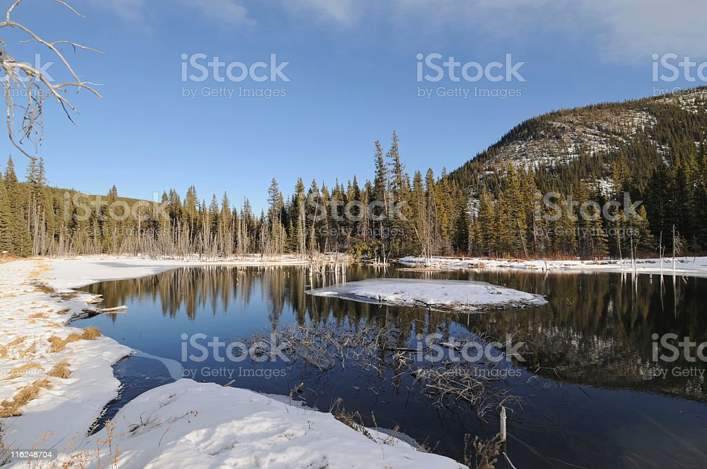 Beaver pond royalty-free stock photo