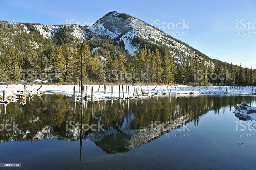 Beaver Pond royalty-free stock photo