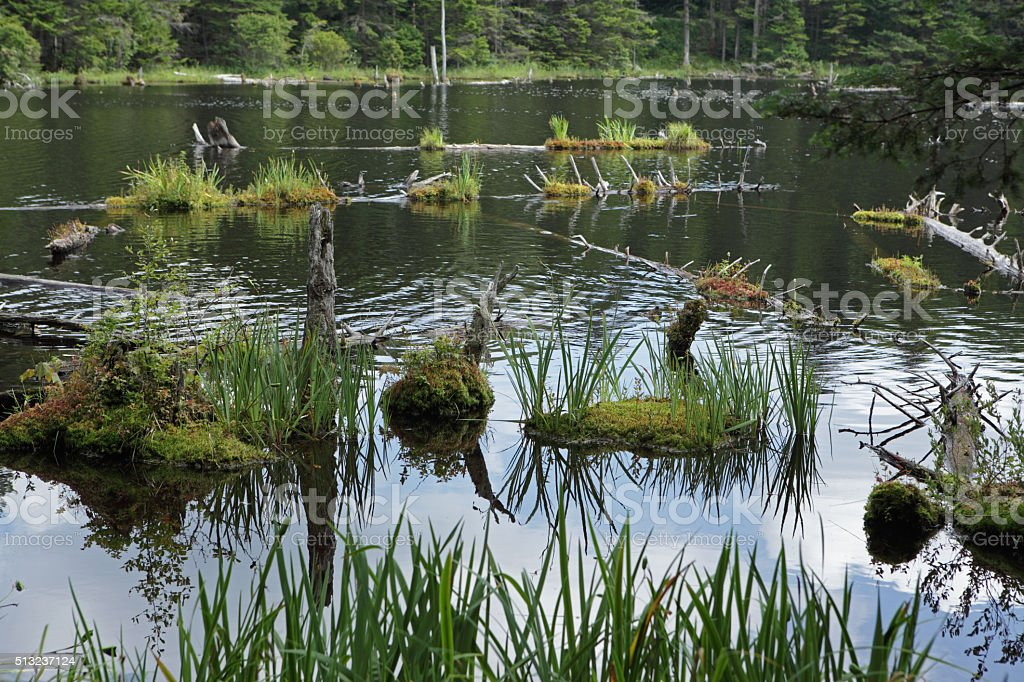 Beaver pond wetland in the Green Mountains of Vermont stock photo